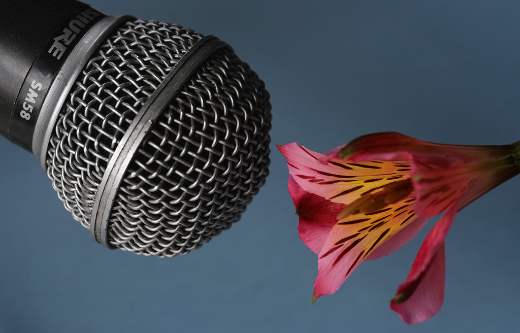 There's often something humorous about setting a non-human subject in front of a microphone, as if there is a Baroque-like tension in the space that surrounds it. Also, the vivid color and organic shape of the flower contrasts nicely with the monochrome tone and geometric shape of the mic.