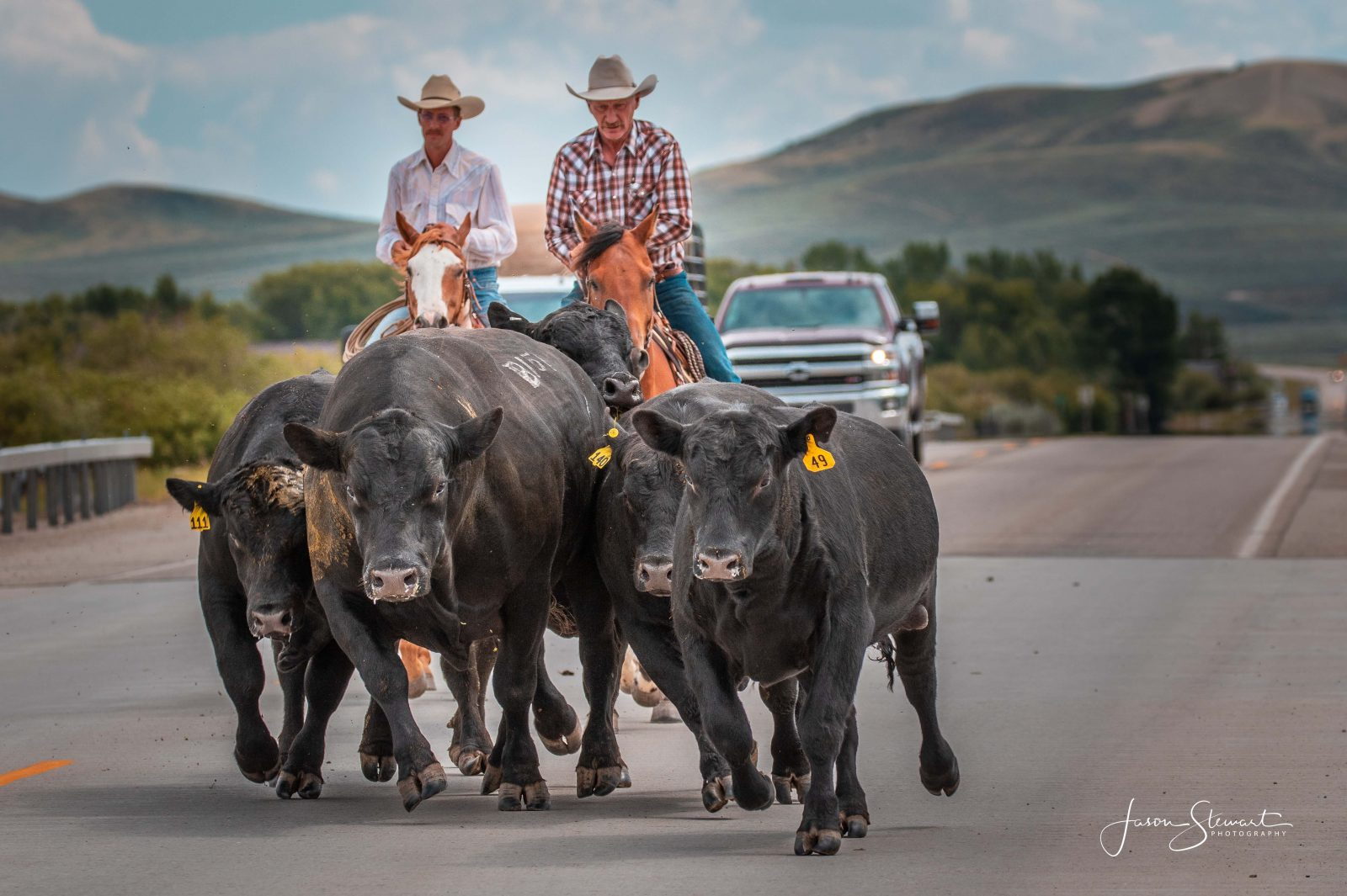 """Wyoming Traffic Jam"" by Jason Stewart."