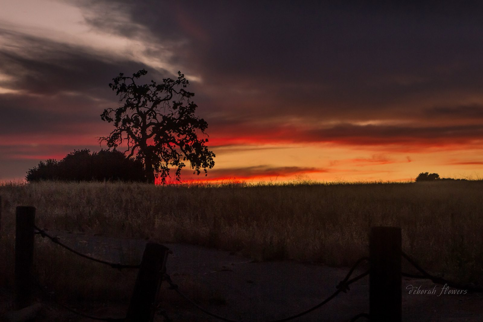 """""""Sunset, Silhouette, and a Little Foreground Too,"""" by Deborah Flowers."""