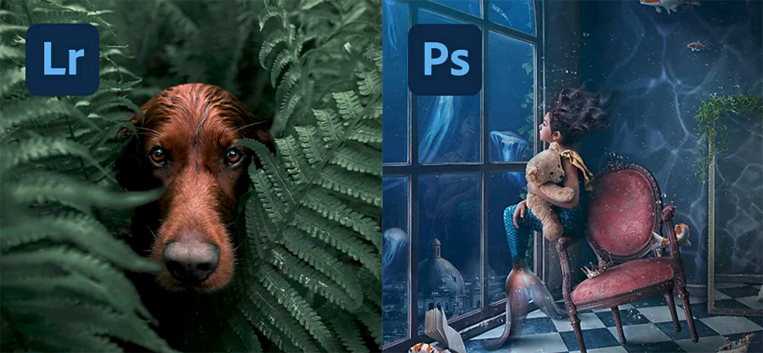 Lightroom vs Photoshop 2021: What's the Difference Between These Two Adobe Programs?