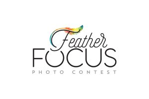 Logo of the Feather Focus photo contest