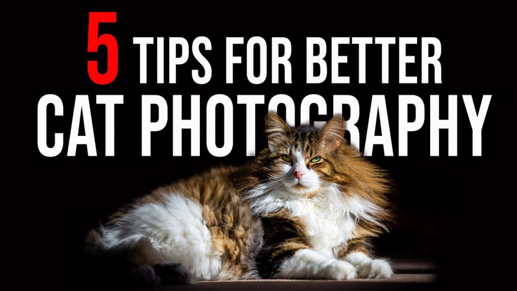 5 Tips for Purr-fect Cat Photos