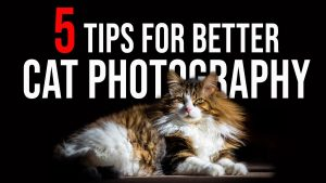 Photo for cat photography tips