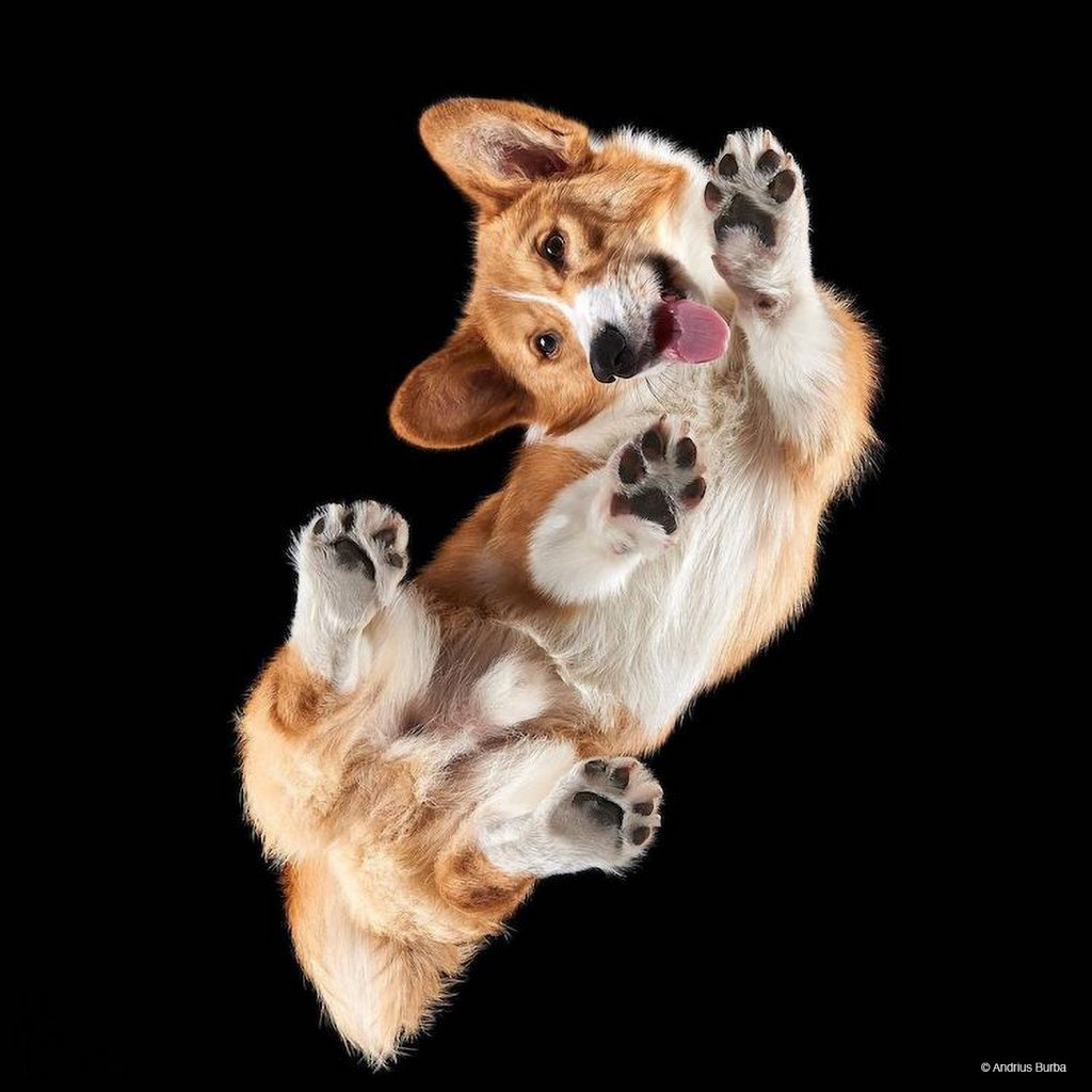 Photographer Captures Cats and Dogs from Below in Adorable Photo Series