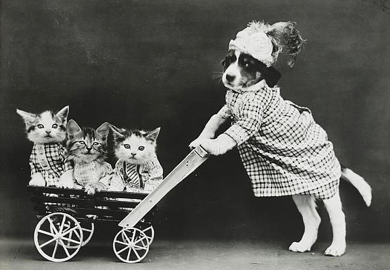 Photo by Harry Whittier of dog pushing cats