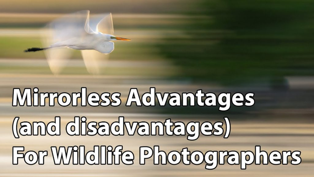The Pros and Cons of Mirrorless Cameras for Wildlife Photography