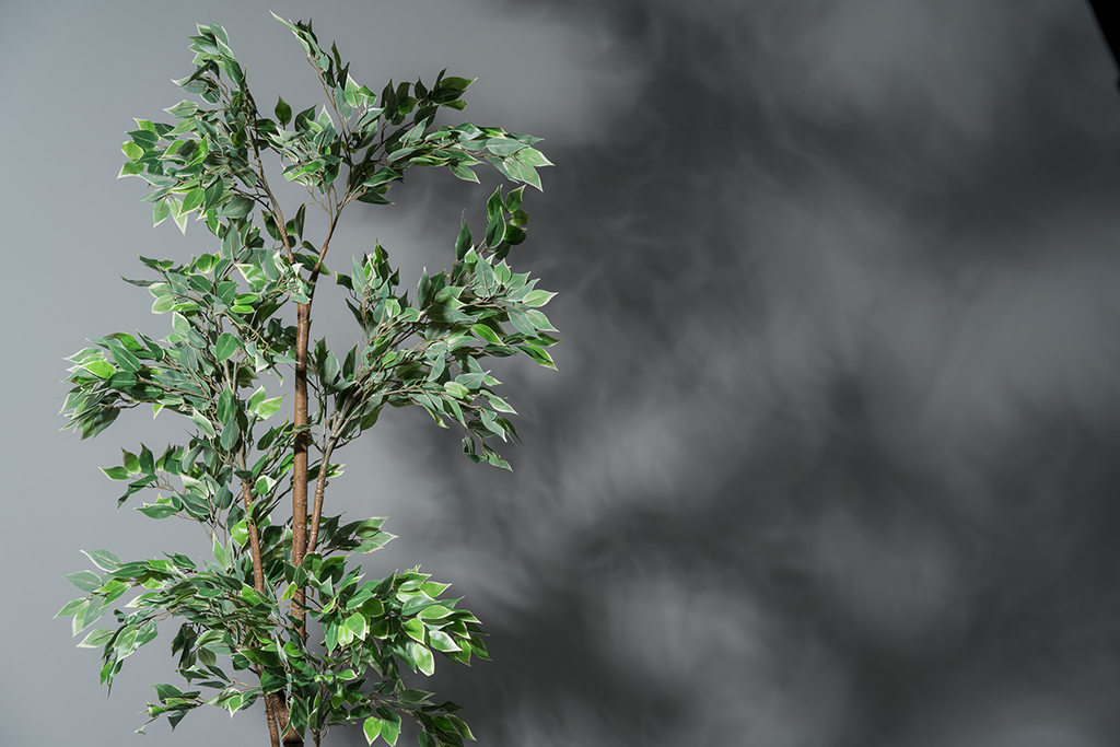 A plant can also make artificial light look more natural