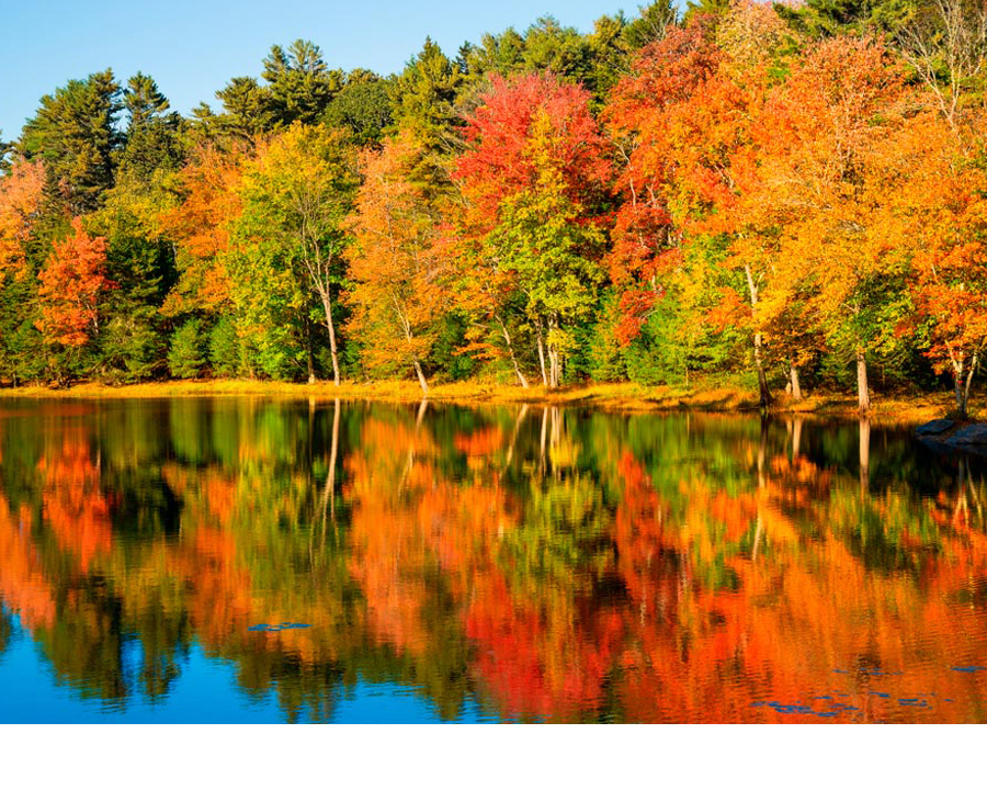 5 Tips For Photographing Fall Foliage