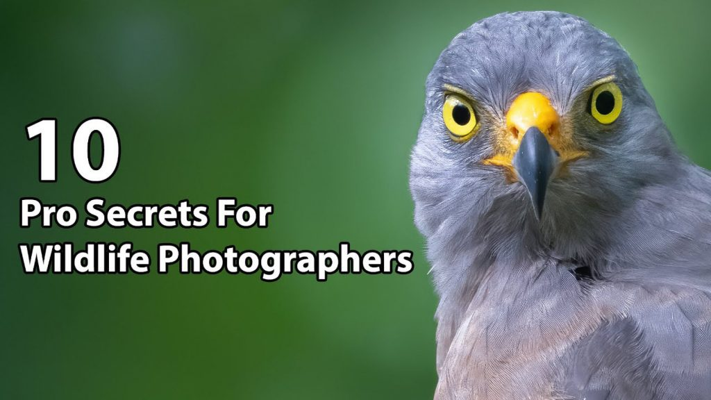 Top 10 Secrets of the Pros for Wildlife Photography