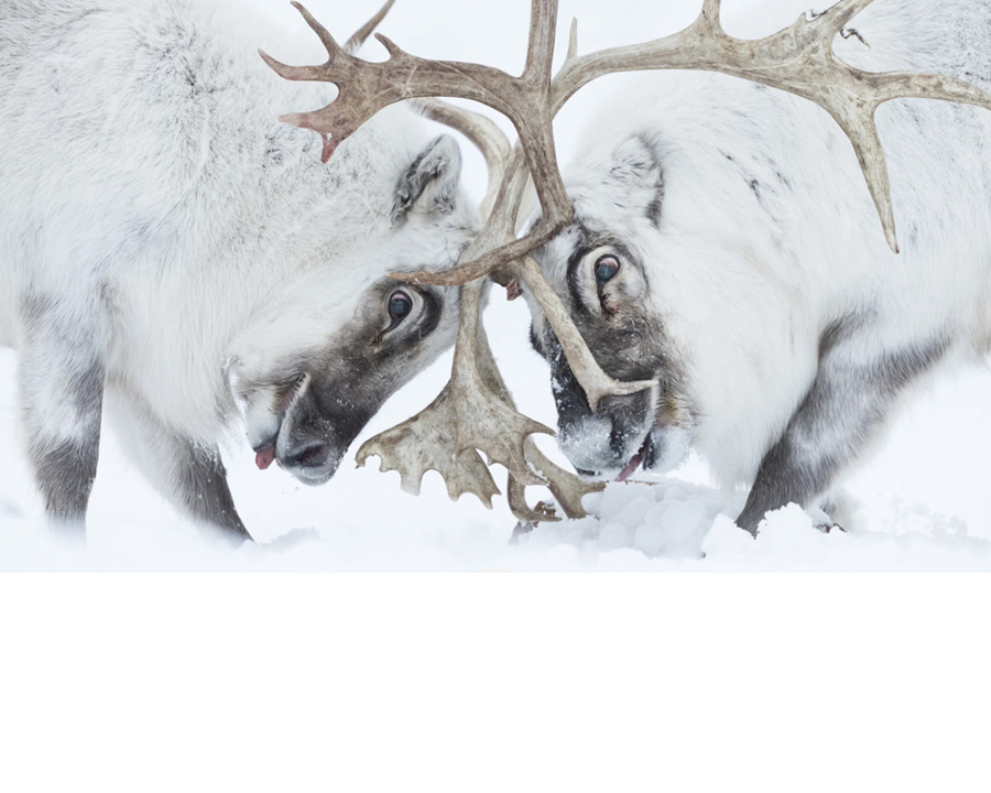 Winners of the Wildlife Photographer of the Year Awards!