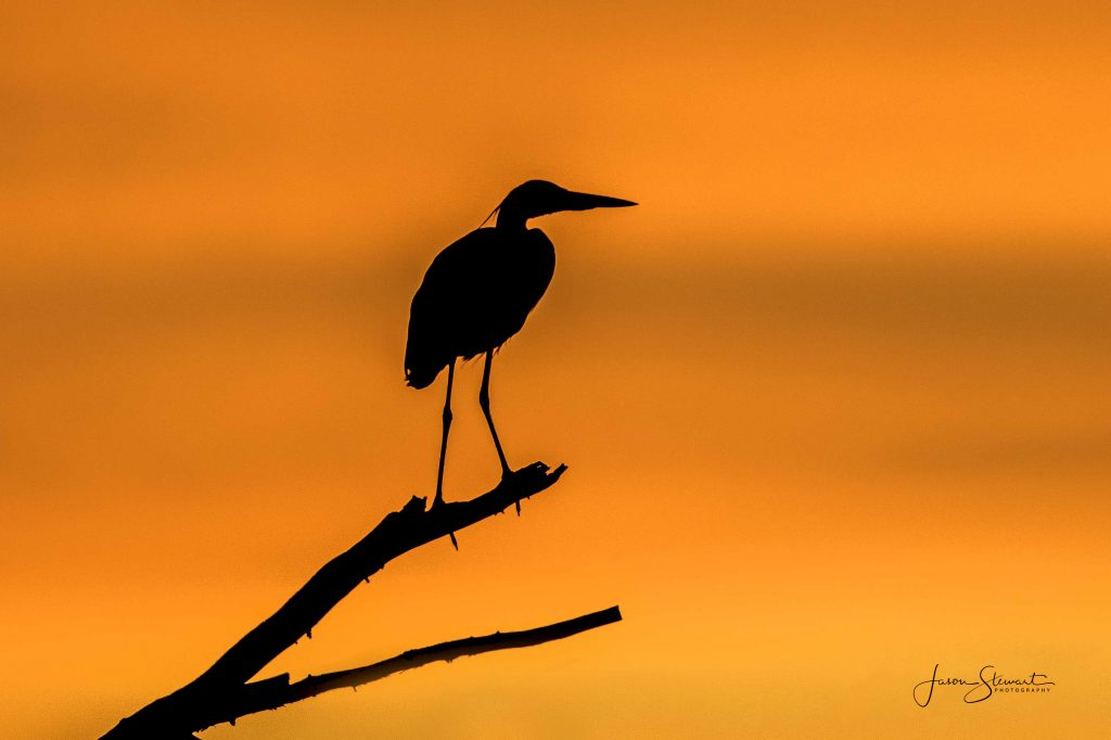 """Striking Silhouettes"" Photo Challenge Winner Jason Stewart"