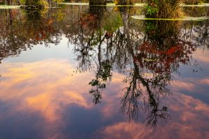 Autumn scenery reflected in the water