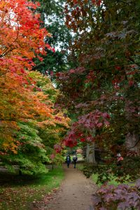 Autumn at Harcourt Arboretum