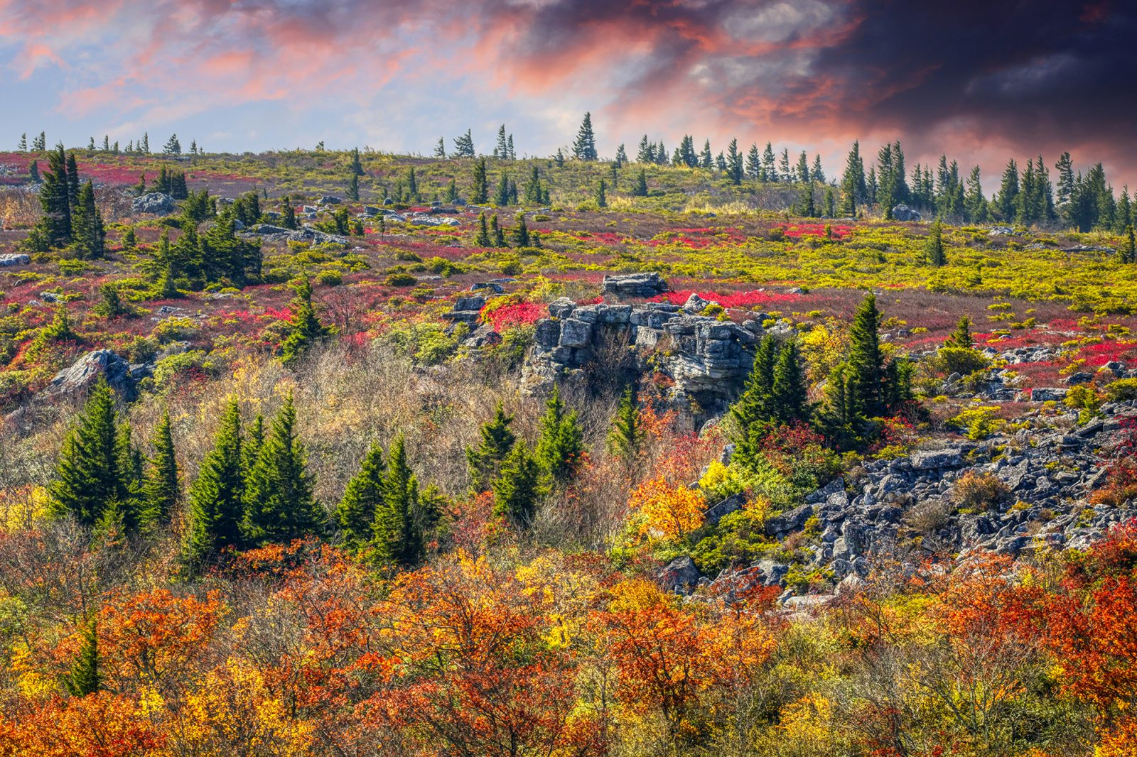 The splendor and loneliness of autumn