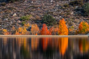 Blurred Reflections