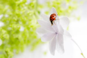 The Uninvited Spring Guest
