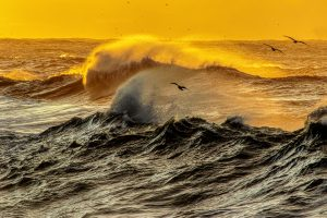 To fly over rough waves catch the fish