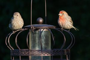 Mr. and Mrs. Finch
