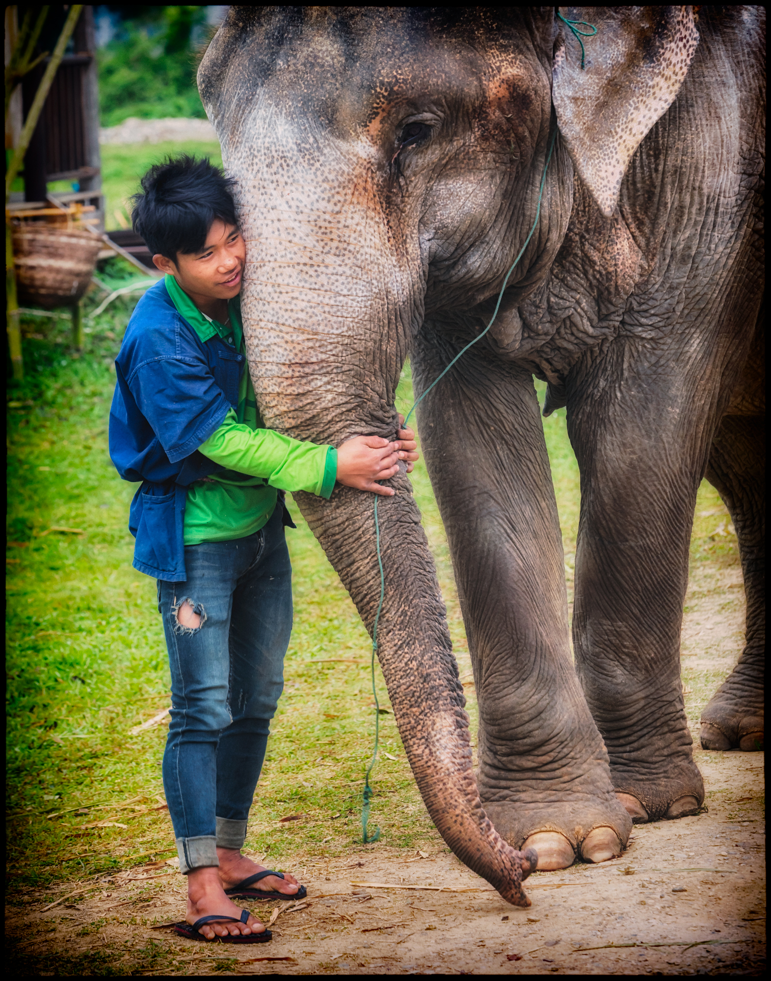 Mahout and his elephant