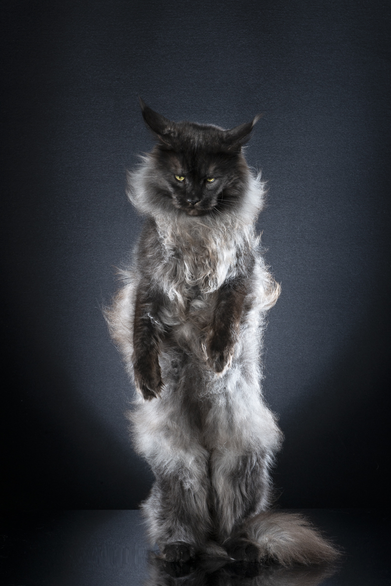 STANDING CATS – TANGO by Alexis Reynaud