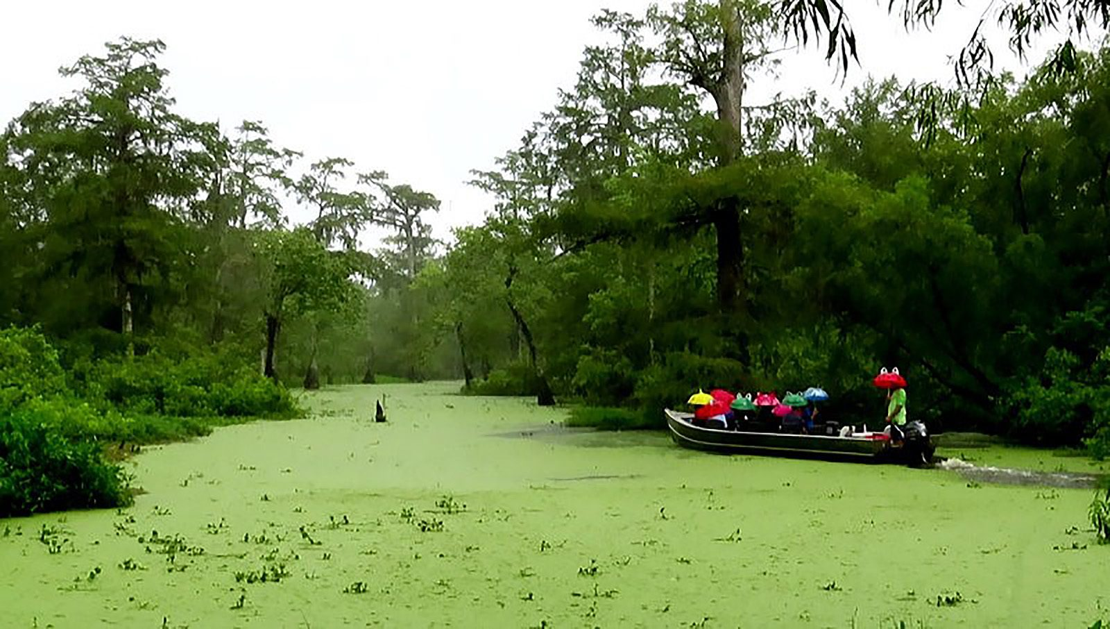 Rainy, Louisiana Swamp Boat Ride